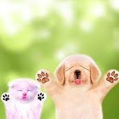 Cat Dog HD Live Wallpaper
