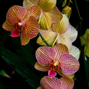 Bromeliad Orchids by Jonathan Wheeler - Flowers Flower Gardens ( orchids, gardens, flowers, bromeliads, tropical flowers )