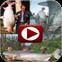 Big Fish Videos icon