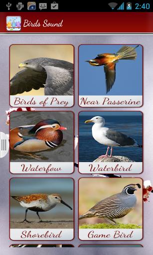 鳥呼叫聲音