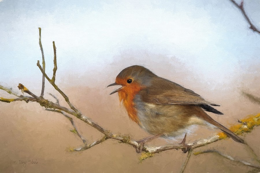 A Robin (Charcoal I) by Tony Steele - Digital Art Animals ( topaz impression )