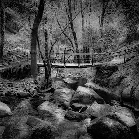 Looking for the waterfall by Paulo Veiga - Black & White Landscapes ( water, b&w, park, wood, 2014, waterscape, grass, drop, waterfall, paulo veiga, bw, pixoto, stone, era, forest, landscape, photography, grasses, tree, herb, trees, looking for the waterfall, wet, stones,  )