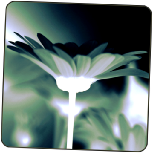 Black White Camera Effect