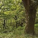 Árboles Ibéricos icon