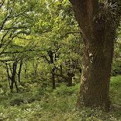 Árboles Ibéricos