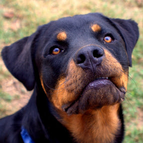 Molly by Dougetta Nuneviller - Animals - Dogs Portraits