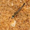 Ground Skimmer