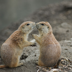 Give me a kiss..... by Edzo Boven - Animals Other (  )