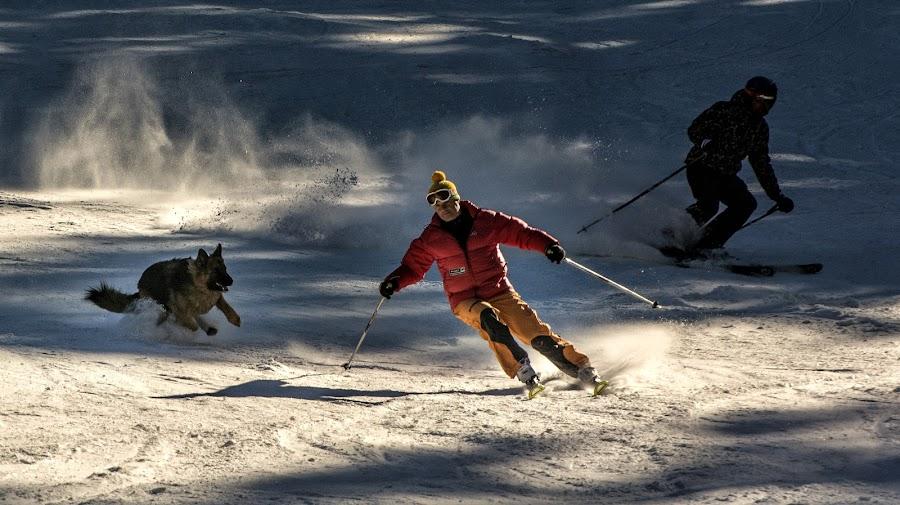 Ski with best friend 2 by Grigore Roibu - Sports & Fitness Snow Sports ( ski, extreme, person, mountain, sports, travel, recreation, destination, vacation, winter, season, pet, snow, action, resort, dog, dinamic, man, animal, piste )