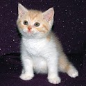 Traductor para Gatitos y Gatos logo