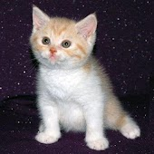 Traductor para Gatitos y Gatos