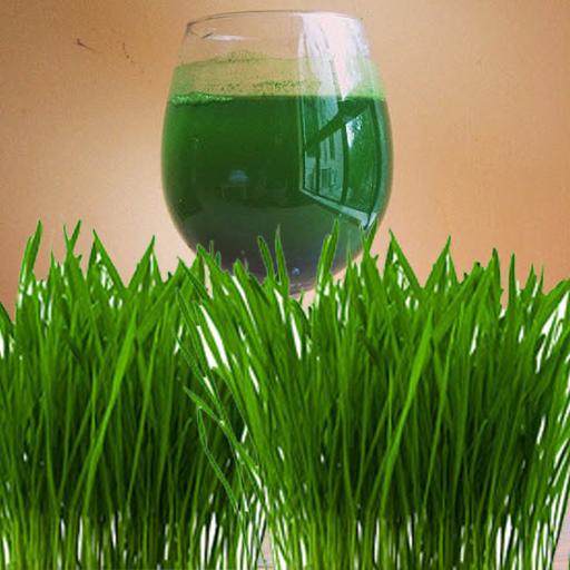 小麥草的健康益處