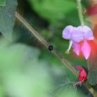 Black Beetle Unknown