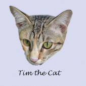 Tim the Cat