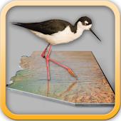 Birding Sites Phoenix - Free