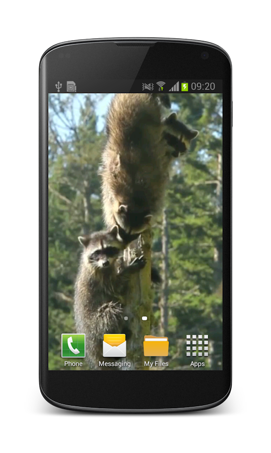 Raccoon Free Video Wallpaper- screenshot