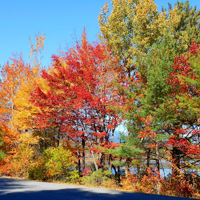 Beautiful Fall by Sandy Davis DePina - Landscapes Mountains & Hills ( mountains, blue sky, maine, foliage, fall, , renewal, green, trees, forests, nature, natural, scenic, relaxing, meditation, the mood factory, mood, emotions, jade, revive, inspirational, earthly )