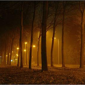 November mist. by Fred Starkey - City,  Street & Park  Street Scenes (  )