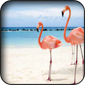Flamingo Wallpapers