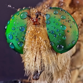 Handsome of Me by Vincent Sinaga - Animals Insects & Spiders
