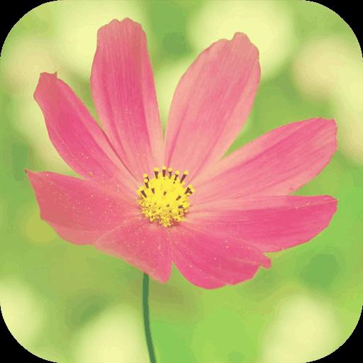 花卉世界壁紙 娛樂 LOGO-阿達玩APP