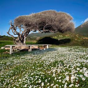 Springtime by Anna Tatti - Nature Up Close Trees & Bushes ( sardinia west_coast nature springtime landscape,  )