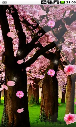 Amateur Garden Sakura HD