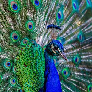 Beautiful Bird.jpg