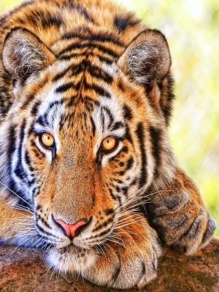 Tiger Run Games