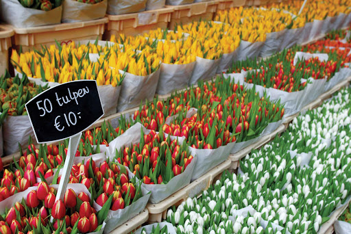 50 tulips for 10 euros: At a flower market in Amsterdam, the Netherlands.