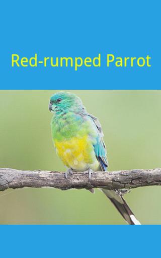 【免費教育App】教你认识鸟-APP點子