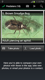 Insect ID: The Ute Guide- screenshot thumbnail