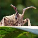 Longhorned beetle