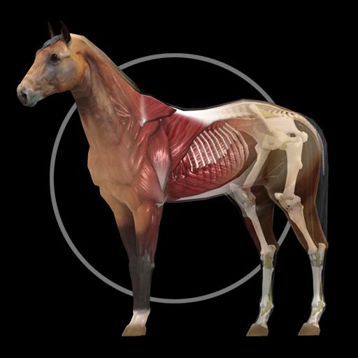 Horse Anatomy: Equine 3D LOGO-APP點子