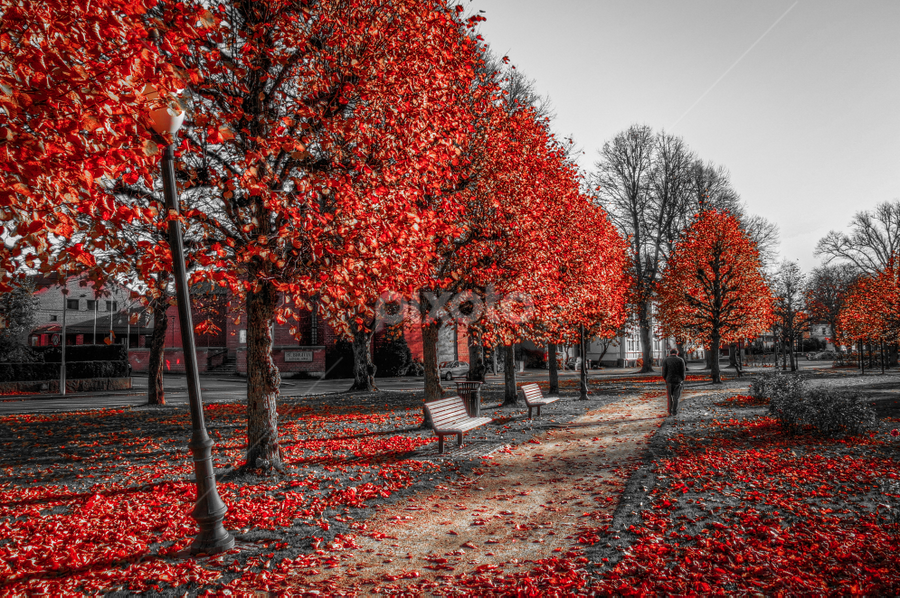 Fredrikstad, Norway by IP Maesstro - City,  Street & Park  City Parks ( fredrikstad, hdr, tree, park, autumn, fall, city, norway, selective color, pwc )