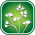 2600 New Mexico Wildflowers icon