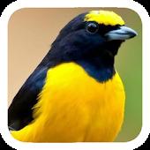Sound Bird