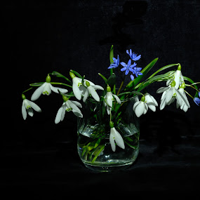 by Teglas Marin - Flowers Flower Arangements