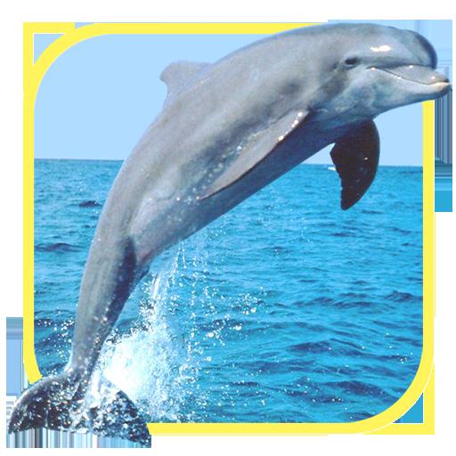 海洋里的精灵:海豚 休閒 App LOGO-硬是要APP