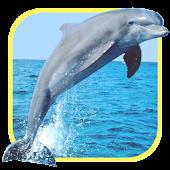 Oceans Elf: Dolphins