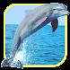 海エルフ:イルカ