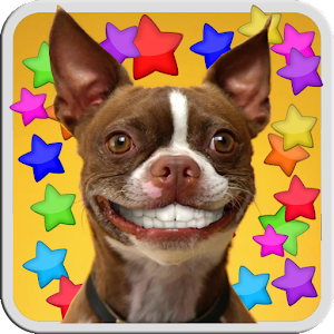 DOG SMILES LIVE WALLPAPER  Android Apps on Google Play