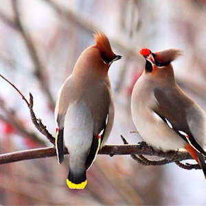 Birds_1_image.png