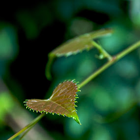 by David Goss - Nature Up Close Leaves & Grasses (  )