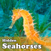 Hidden Object Games-Seahorses