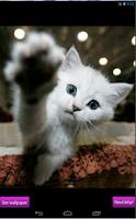 Screenshot of Nice kittens