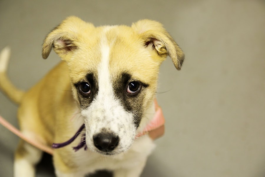 Farrah the Shelter Dog by Tonya Sheetz - Animals - Dogs Portraits ( animals, dogs, dog, portrait, animal )