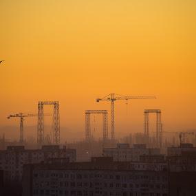 Twilight cranes by Matei Edu - City,  Street & Park  Skylines ( bird, orange, bucharest, cranes, twilight, romania, cityscape,  )