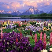 3D mountain flowers HD LWP