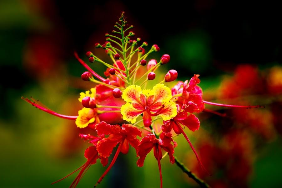 by Barry Ooi - Flowers Single Flower